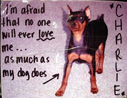 post secret dog